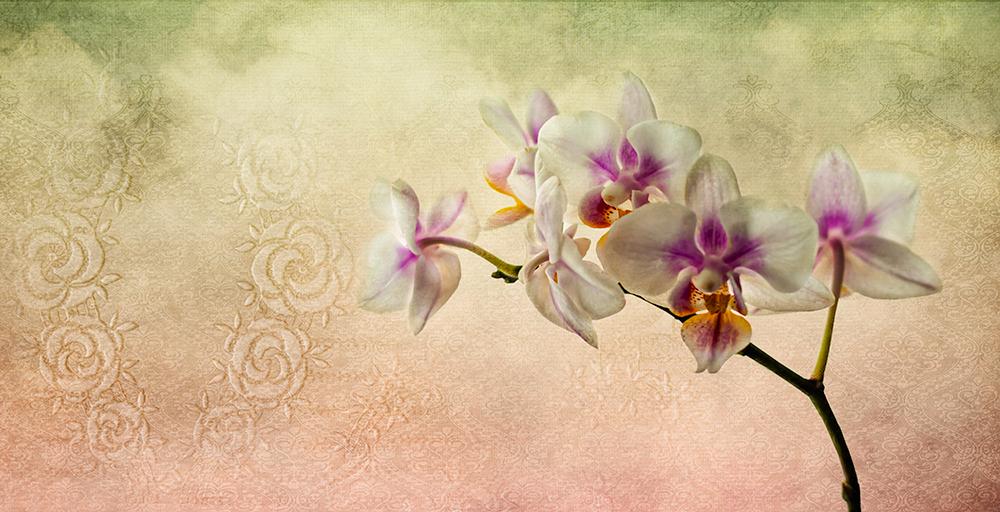 dreamingoforchids.jpg