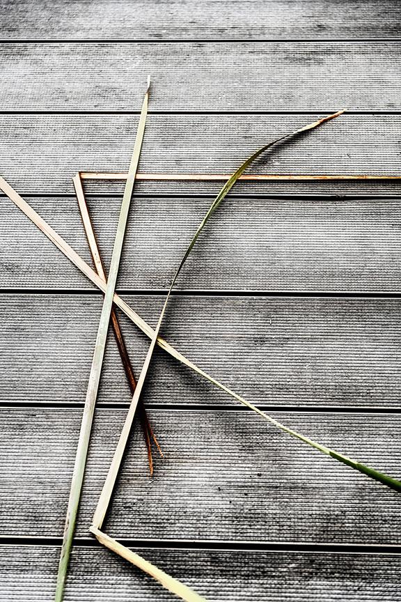 grass-abstract-2.jpg