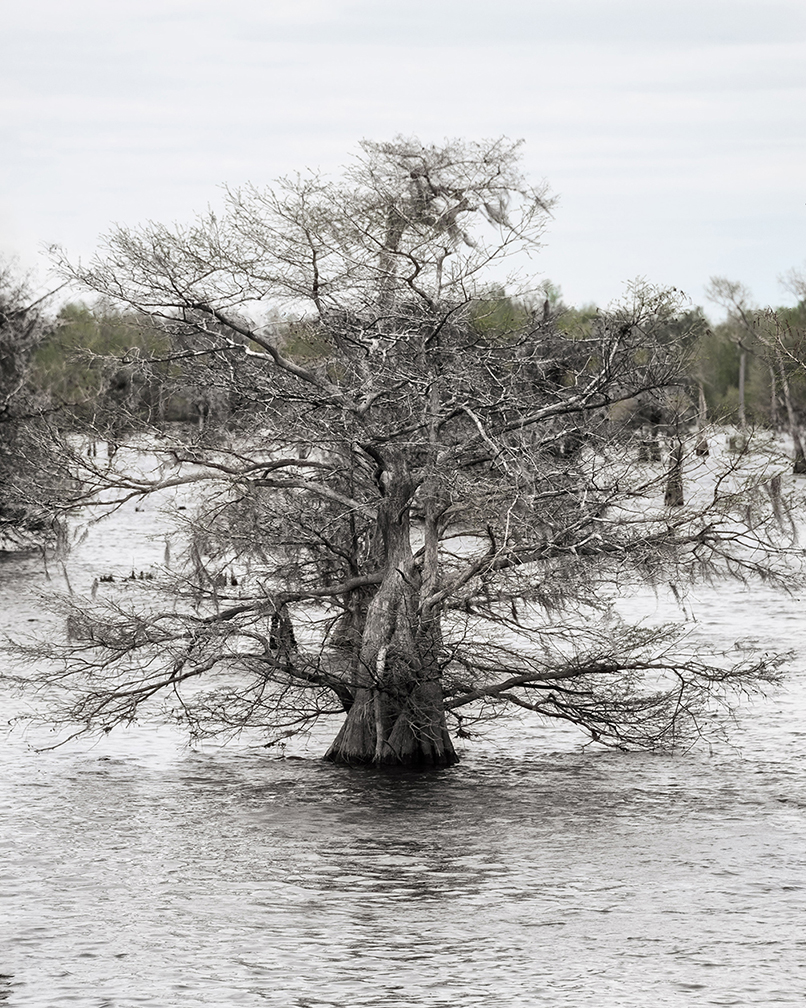 tree-3-1.jpg