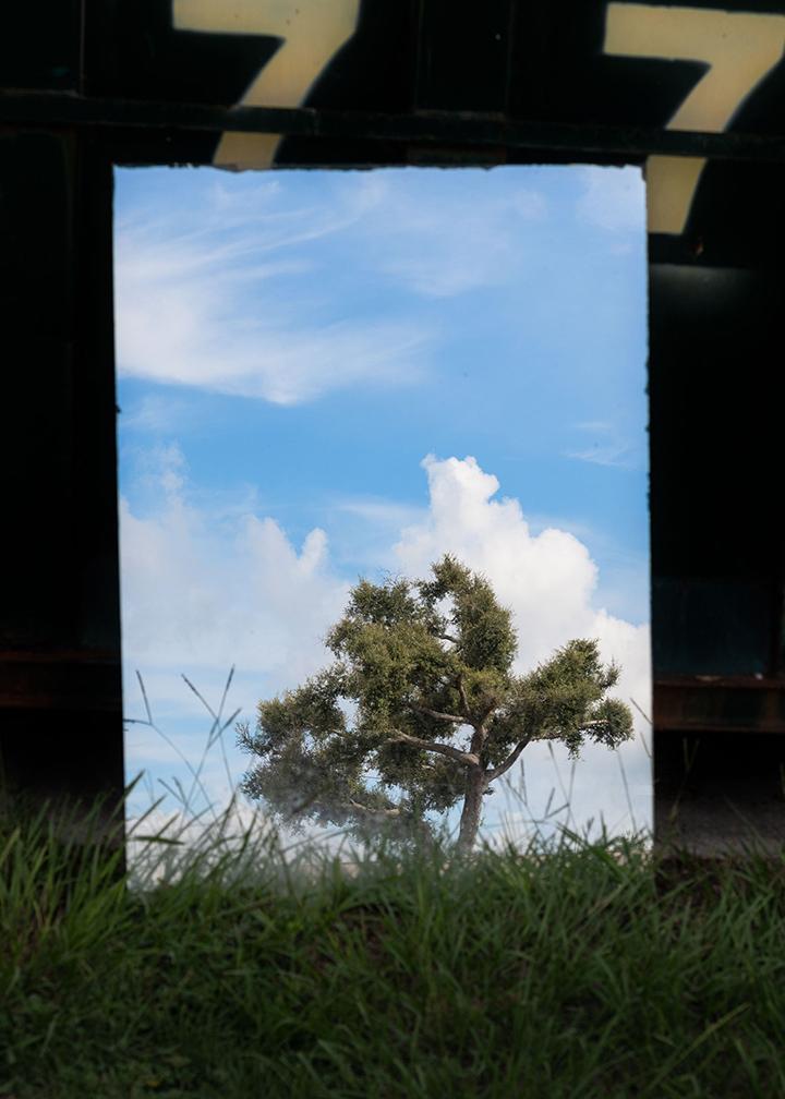 tree-77-2.jpg