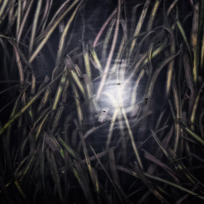 water-grasses-2a.jpg
